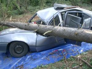 Baumfällaktion der bayerischen Forstverwaltung zur Demonstration der Gefahren
